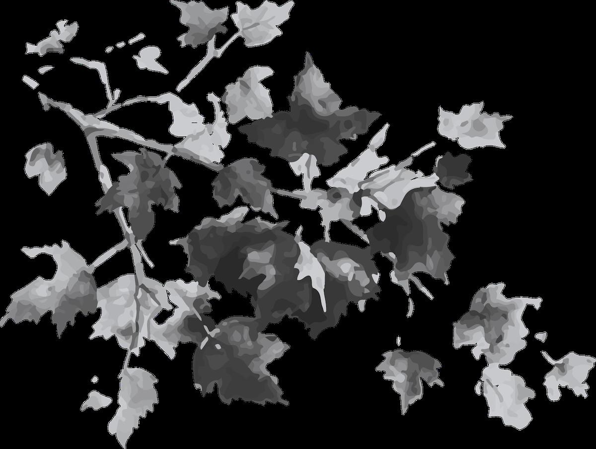 branchagesympa